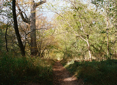 tunnel (tarkushoo) Tags: film medium format m645 mamiya portra path woods trees landscape hike forest 6x45 120