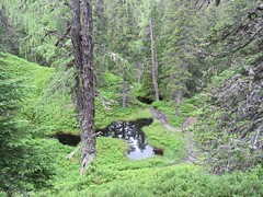 Magical forest (katrienberckmoes) Tags: magical forest alps rauris urwald pine trees valley austria landscape