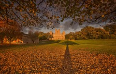 In the shadow of the tree (Captain Nikon) Tags: wollatonhall wollatonpark deerpark shadow autumnal autumn leaves framed nikond7000 sigma1020mmf4 leadin