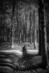 2016.10.27 (michaeljoakes) Tags: eos efs18200mmf3556is mono bw noiretblanc canoneos7d explore explored explored20161026 trees bnw digital contrast outside autumn herbst lautomne autumnleaves nature light dream landscape