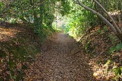 Woodland Path @ Ightham (Adam Swaine) Tags: woodland woodlandfloor footpath paths leaves trees ighthammote walks kent nationaltrust naturesfinest kentweald england english britain british swaine ukcounties