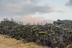 The Wall (Gigin - NoDigital) Tags: grass trees plant thingvellir sunset nature sky geography monolith europe iceland rocks