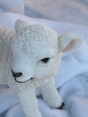 339:365, 2016, The Braintree Christmas Nativity IMG_0625 (tomylees) Tags: stable nativity georgeyard braintree essex december 2016 4th sunday lamb project 365