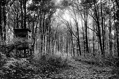 (salparadise666) Tags: busch pressman c 2x3 wollensak 101mm fuji neopan acros 100 boxspeed caffenol rs 1230 min nils volkmer bw sw nature vintage camera germany wood autumn yellow green filter