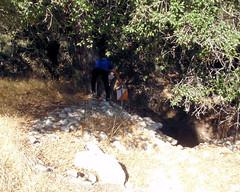 008 Diving Into the Underbrush (saschmitz_earthlink_net) Tags: 2016 california orienteering topangacanyon statepark laoc losangelesorienteeringclub losangeles losangelescounty santamonicamountains