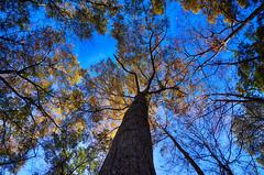 DSC09088-90_HDR (Capt Kodak) Tags: autumn chattahoocheerivernationalrecreationarea fall hdrefexpro2 madefrom3images medlockbridgepark nationalparkservice nikcollectionbygoogle niksoftware photomerge