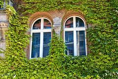 (#3.226) Berlin (unicorn 81) Tags: berlin window fenster haus deutschland pflanzen natur fassadenbegrnung facadegreenery grn
