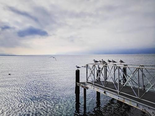 Lago di Ginevra - Vevey #genevalake #vevey #switzerland