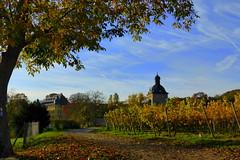 Schloss Vollrads (ivlys) Tags: rhein rhine fluss river schlossvollrads castlevollrads weinberg vineyard landschaft landscape autumn herbst nature ivlys
