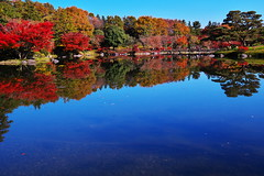 Autumn leaves II (kazs2307) Tags: autumn autumnleaves automncolor red landscape    color   reflection outdoor leaf plant serene tree japan