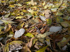 20161025_093745 (vale 83) Tags: autumn leaves nokia n8 friends macrodreams lunaphoto thebestyellow autofocus coloursplosion colourartaward