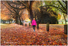 Walking in a picture. (Louis Shum) Tags: autum leaf yellowlief walking picture trees green louisshum fall art artistic awsome tone color beautiful vancouver canada lovely sony sonya58 widescreen