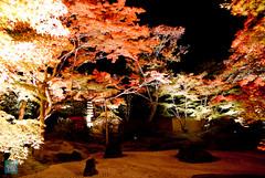 Tohoku 2016 - 501 (西文 Simon) Tags: 日本東北 miyagigun miyagiken 日本