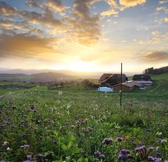 HDR Sunset Bantiger (corinne_benavides) Tags: sunset landscape field flowers clouds hdr