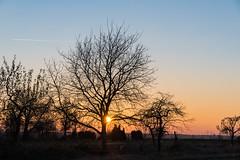 Sonnenuntergang (hinter Bumen) (JBsLightAndShadow) Tags: heidelberg nikon nikond750 d750 tamron tamronsp2470mmf28divcusd dezember december winter 2016 winter2016 dmmerung abenddmmerung sonnenuntergang sonne baum bume feld felder dawn sunset sun tree trees field fields