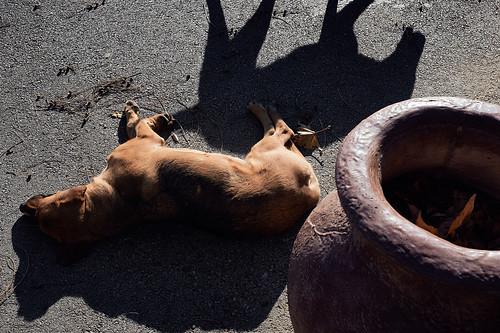 Dog's dream | Собачьи сны