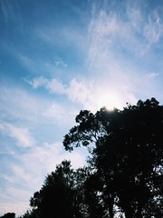 Sky in the tree (Junckr) Tags: photo cloud photography sun photog creative iphone green vscocam photographie sky