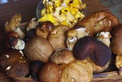 Ils sont arrivés ! (PierreG_09) Tags: nature champignon pyrénées pirineos ariège bolet girolle cèpe seix couserans