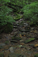 creek (Molly Des Jardin) Tags: park plants usa green water leaves rock stone creek forest flow moss rocks state pennsylvania earth path stones rocky running dirt current 2014 susquehannock drumore 43215mm