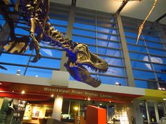 Mississippi River Visitor Center (viktrav) Tags: dinosaur stpaul rex sciencemuseumofminnesota tyrannosaurustyrannosaurus