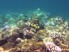 IMG_3182 (Elise Granados) Tags: island hawaii big sep8