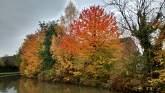 151023_02 (Bushy Park Boy) Tags: autumn trees walking walks canals longwalks onlyconnect coventrycanal b2e beestontoexeter