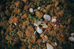 riverbed (itawtitaw) Tags: autumn color nature contrast river glow stones lookdown riverbed 28 organic 24mm isar wideopen canoneos5dii canon2470mm28ii