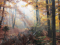 Bodonci-Forest light show (Jolika) Tags: