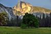Late Afternoon Sunlight Falling on Half Dome (Yosemite National Park) (thor_mark ) Tags: blueskies canvas capturenx2edited centralyosemitesierra colorefexpro cook'smeadow day3 elmtree grassymeadow halfdome hillsideoftrees lookingeast mountains mountainsindistance mountainsoffindistance nature nearsunset nikond800e pacificranges portfolio project365 sierranevada sunsetlight sunsettime trees triptopasoroblesandyosemite washingtoncolumn yosemitenationalpark yosemitevalley yosemiterittersierranevada california unitedstates absolutelystunningscapes