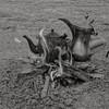 #blackandwhite  #عزل_لوني #السعودية #دلة #شاي #شاهي #جاي #بريق #bw #كوفي #coffee #caffee #قهوة #مكشات #كشته #tea #fire #sonyalpha #عرب_فوتو #تصويري #السعودية #ضو #نار #صور #صورة  #نفود #مساء_الخير #goodevining    # #☕ (Instagram x3abr twitter x3abrr) Tags: blackandwhite bw coffee fire tea صور شاي كشته نار caffee صورة جاي ضو تصويري السعودية قهوة دلة sonyalpha كوفي شاهي نفود بريق مكشات مساءالخير عزللوني عربفوتو goodevining