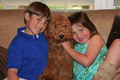 this-is-max-happy-living-in-ca--hes-one-of-riley-and-chewys-puppies-_4596287107_o