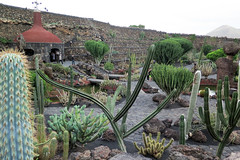 Jardin de cactus (Neil M Holden) Tags: guatiza canarias spain canary island gualiza cactus gardendecactus neilholden studionine worldtrekker unlimitedphotos