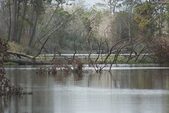 DSC03941 (2) (Theresa Kay) Tags: beach water reflections bayou illusions cypresstrees waterscenes sceneslandscape taylorbayou
