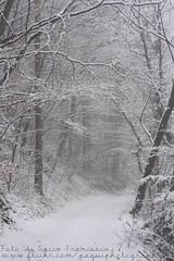 Wintertime (PaquiPhotography) Tags: winter blackandwhite snow cold tree castle leaves canon wow dead leaf natura val neve di trento thun 50 non tamron 90mm castello bianco freddo trentino bosco valdinon primaneve eos1000d castelthun