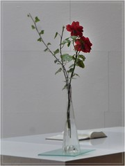 graceful (friedrichfrank1966) Tags: church kirche wilnsdorf autobahn highway rose vase rahmen rosa book buch libro flower blume bokeh weis