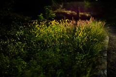 yuugure (N.sino) Tags: m9 summilux50mm sunset dusk