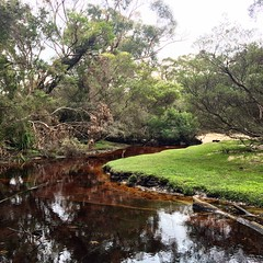 Cove Creek - Wilsons Promontory