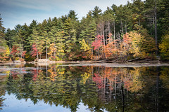 Colored reflections (mraogr) Tags: fall autumn newengland boston andover merrimackvalley color foliage leafpeeping leaves leafpeepers trees fallcolors falllandscape lansdcape reflections reflection stillreflection mirror mirroredimage haroldparkerstateforest pond lake water treeline