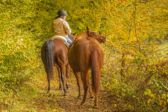 Forest Walk (Renate Bomm) Tags: 366 2016 automne bosque canoneos6d herbst natur pferd reiter renatebomm spaziergang wald ef28135mmf3556 forest walk animal flickrunitedaward goldengallary green tree bltter leaves vacation ferien asbeautifulasyouwant