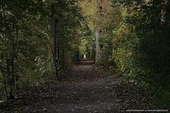 Der Weg (Erwin Lorenzen) Tags: wald wanderweg herbst baum bume canon weg natur nature
