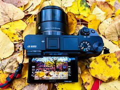 Sony a6000 & Sigma 19mm ((Jessica)) Tags: boston unionpark sony a6000 sigma sonyalpha6000 sigma19mm sonyalpha sonya6000 sigmalens behindthescenes camera autumn leaves massachusetts newengland fall foliage yellowleaves southend colorful historic neighborhood 19mm street lightroom outdoor seasonal brick outdoors vibrant season brownstones tree alpha houses carpetofleaves symmetry leadinglines seasons trees unitedstates buildings townhouses