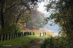 On a wonderful autumn day (Greet N.) Tags: drenthe cyclepath autumn trees forest colors misty oktober fochtelorveen natuurmonumenten
