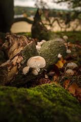 What lies beneath (D1g1tal Eye) Tags: fugus fungi moss wood tree leaves leaf autumn nikon d7000 tamron1750mmf28
