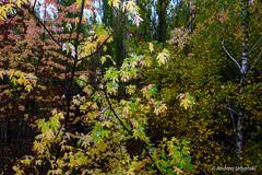DSC_1428 (andrzej56urbanski) Tags: chernobyl czaes ukraine pripyat prypeć