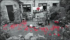 We will remember them (Colin Massey) Tags: poppy remembrancesunday selectivecolour