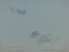 Grey Horses (byGabrieleGolissa) Tags: fineartphotography kunstfotografie kunstphotographie fotokunst photokunst foto fotografie fotographie himmel photo wolken clouds photography skies sky grey grau horse pferd wolke