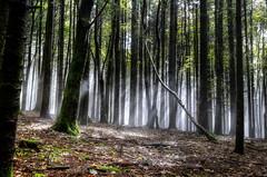 Fog (Strocchi) Tags: fog nebbia woods bosco trees alberi canon eos6d 24105mm
