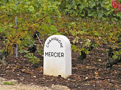 PICT0824 (72grande) Tags: epernay champagnemercier mercier champagne