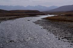 MAQ_0413 (MolviDSLR) Tags: deosair national park skardu gilgit baltistan northern areas pakistan brown bear wild life scenery landscape