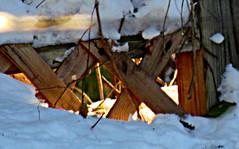 lattice work in snow (~nevikk~) Tags: windowshot lattice neighborsyard